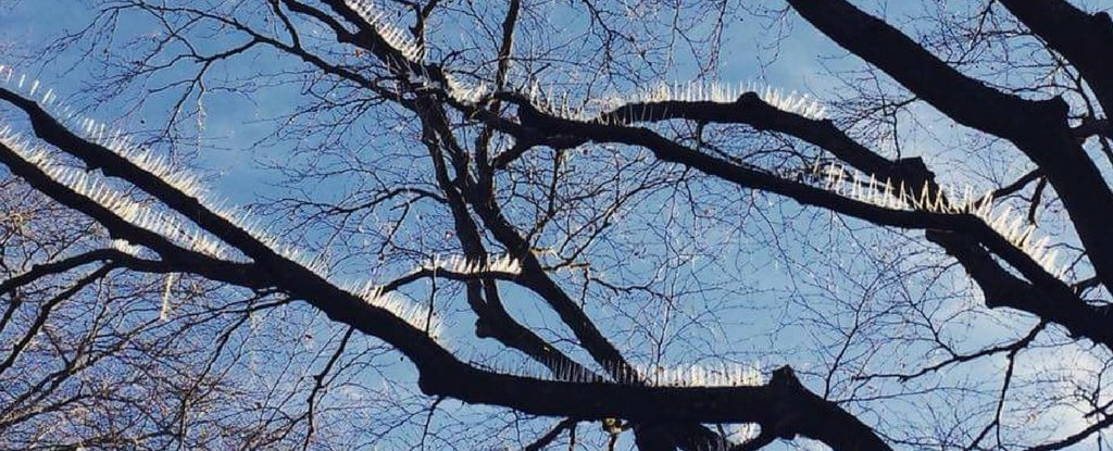 The Internet Is Understandably Mad Over These Bird Spikes Installed in a Tree